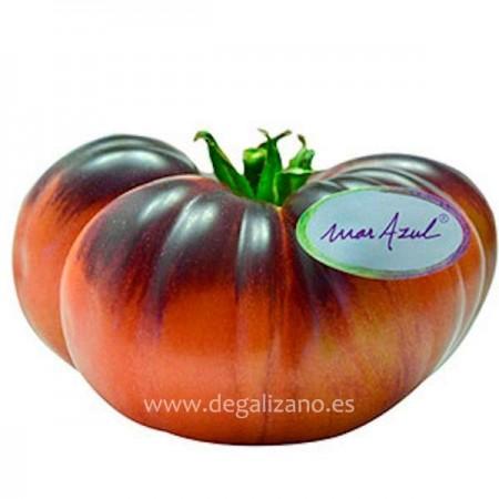 Tomate Mar Azul, Revitalizante y Antioxidante