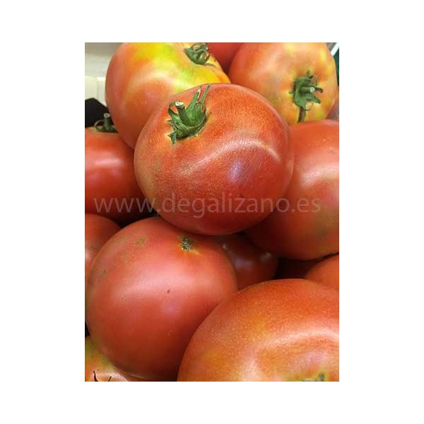 "Tomate de Galizano ""Zona Norte"" Tomate con Sabor"